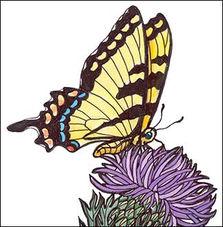 Cirsium Season by Kim Russell | Tiger Swallowtail Butterfly