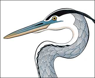 In Harmony by Kim Russell | Detail of Great Blue Heron