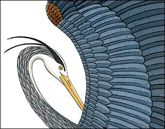 Great Blue on the Wing Detail by Kim Russell | Great Blue Heron