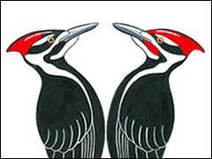 Pileated Pair by Kim Russell at Virtual Art Fair ON The Square | Pileated Woodpecker