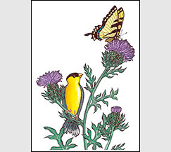 Cirsium Season by Kim Russell | Goldfinch and Tiger Swallowtail