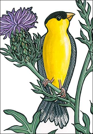 Goldfinch | Kim Russell | Cirsium Seano